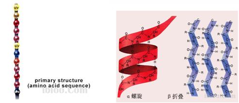 高级结构和二硫键对蛋白质的生物活性有重要影响.