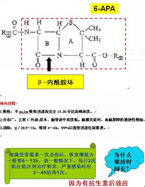 窄谱青霉素类   青霉菌培养液中提得:x