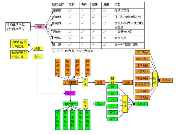 2020中考生物知识点结构图分类整理:生物的结构层次