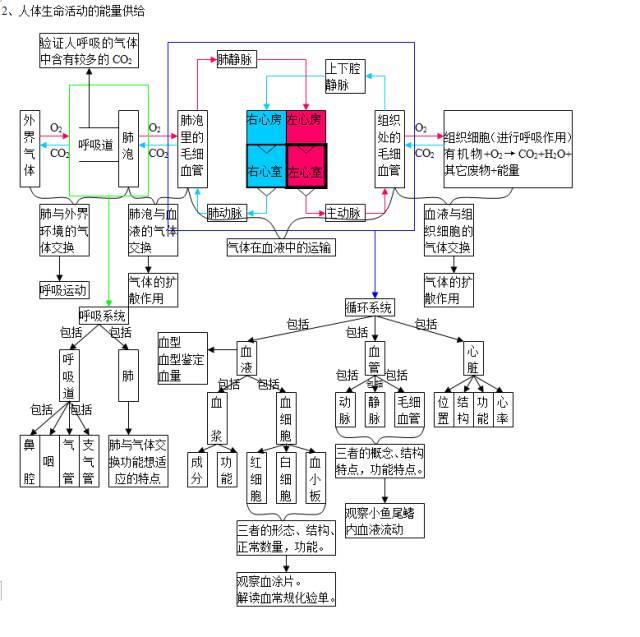 2020中考生物知识点结构图分类整理:生物圈中的人