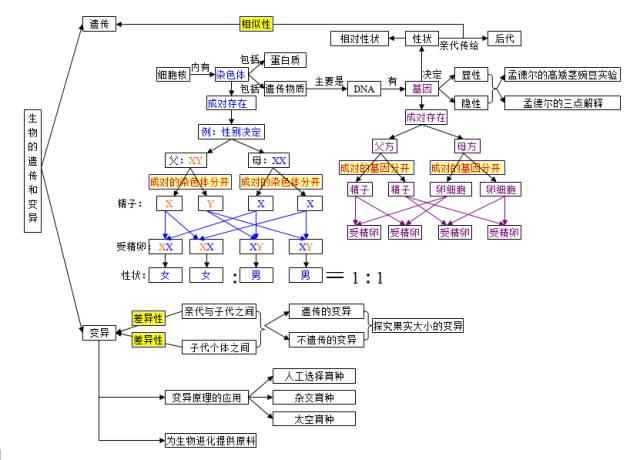 2020中考生物知识点结构图分类整理:生物的生殖发育与遗传